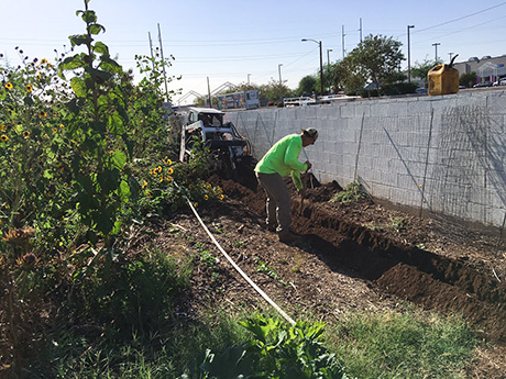 Creative Environments employee digs trenches for new irrigation system.