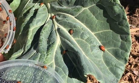 6 Steps to Rid Your Garden of Bad Bugs | The Society of St