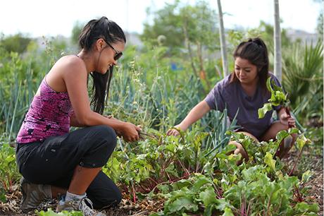 Urban Farm volunteers