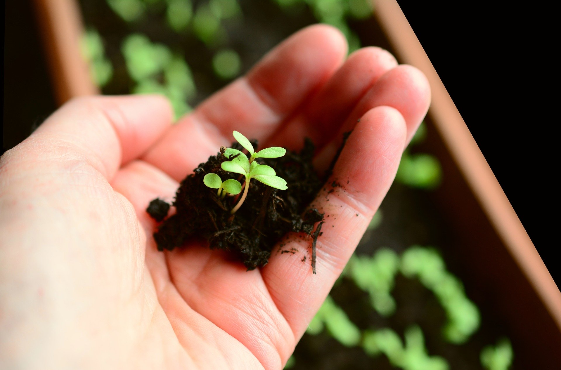 How to plant seed starters at home