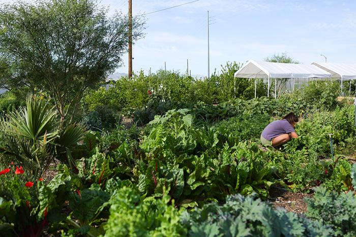 St. Vincent de Paul Urban Farm