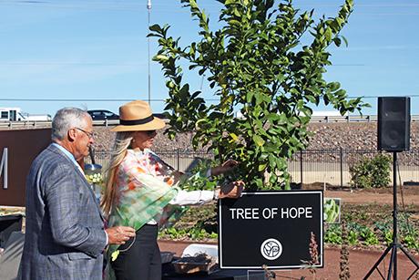 Waltons, Tree of Hope
