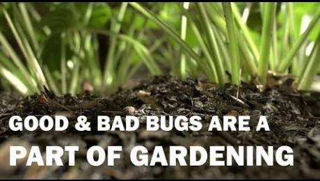 Dig It: Good Bugs vs. Bad Bugs in Gardening